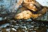Lipska pećina