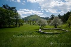 Cetinjsko polje