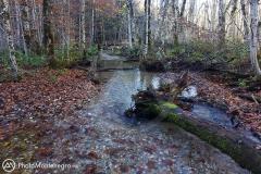 Biogradska rijeka